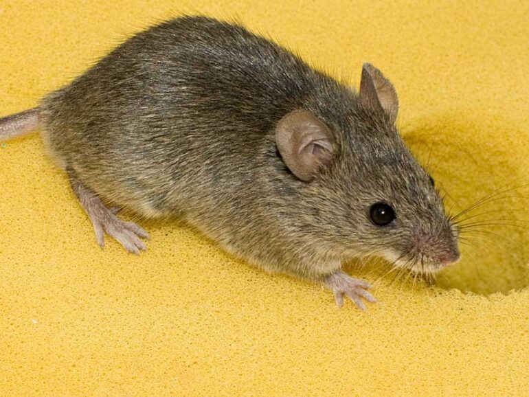 Rodents are harmful