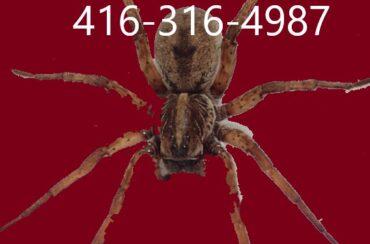 Spider exterminator